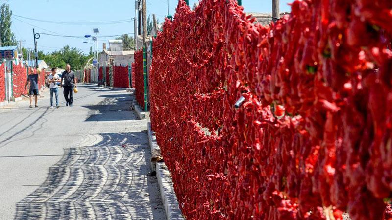 In Bildern: Rote Paprika in der Gemeinde Santanghu von Chinas Xinjiang