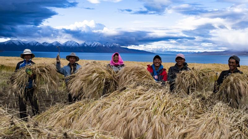 Dorfbewohner im tibetischen Hochland feiern Gerstenernte