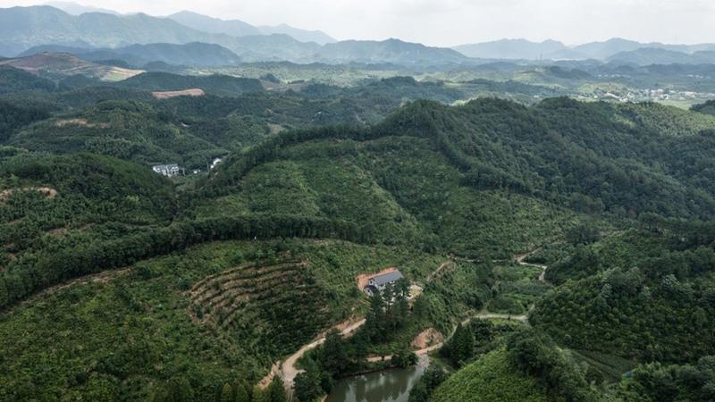 China emittiert erste Anleihen für Wälder als Kohlenstoffsenken