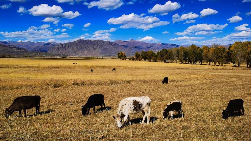 Herbstlandschaft in Lhasa, Tibet