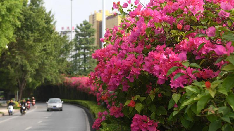 Blumenlandschaft in Nanning